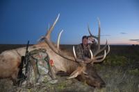 New Mexico Bull